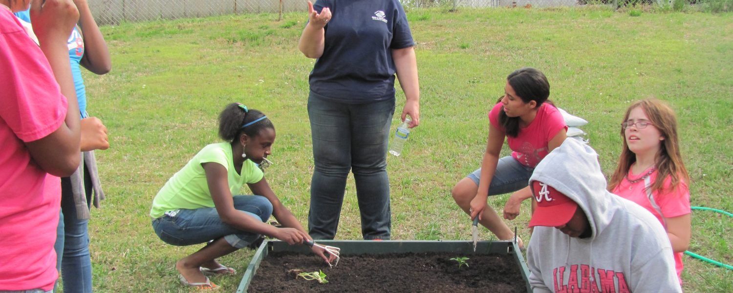 Boys & Girls Club battles hunger with container gardens