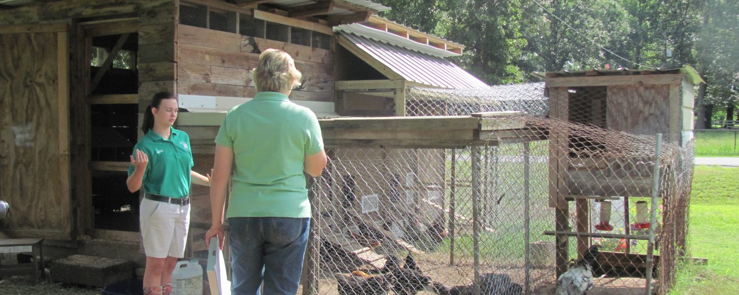 Etowah County 4-H forges Chick Chain for second year